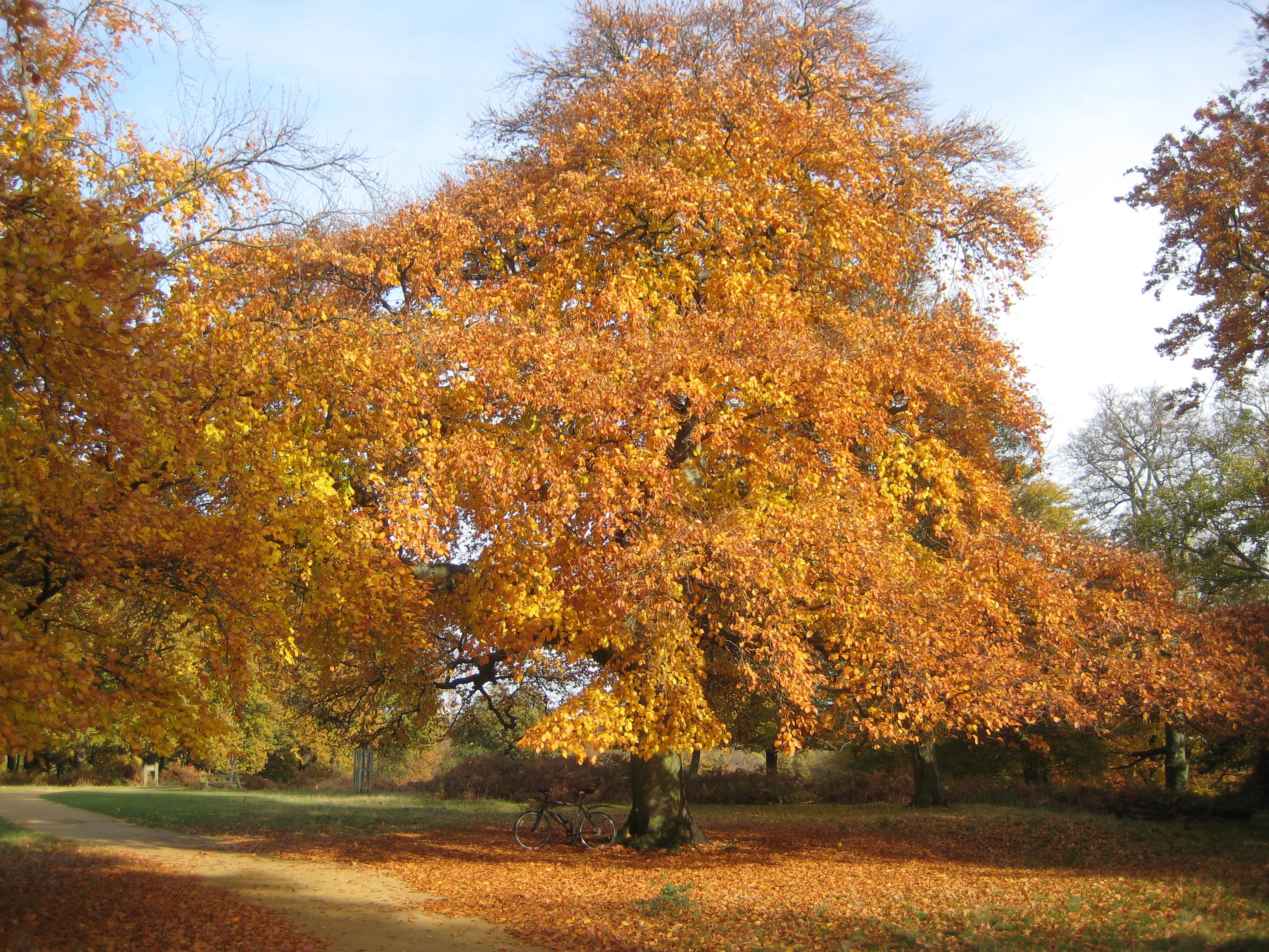 Read Autumn In Richmond Park Online Free